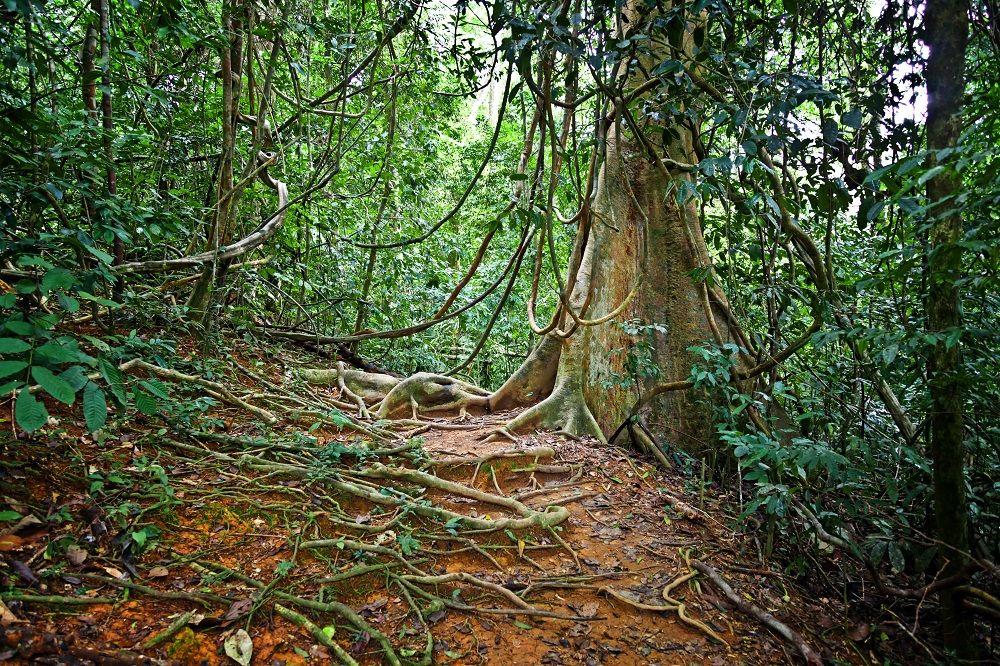 پارک ملی تامان نگارا Taman Negara