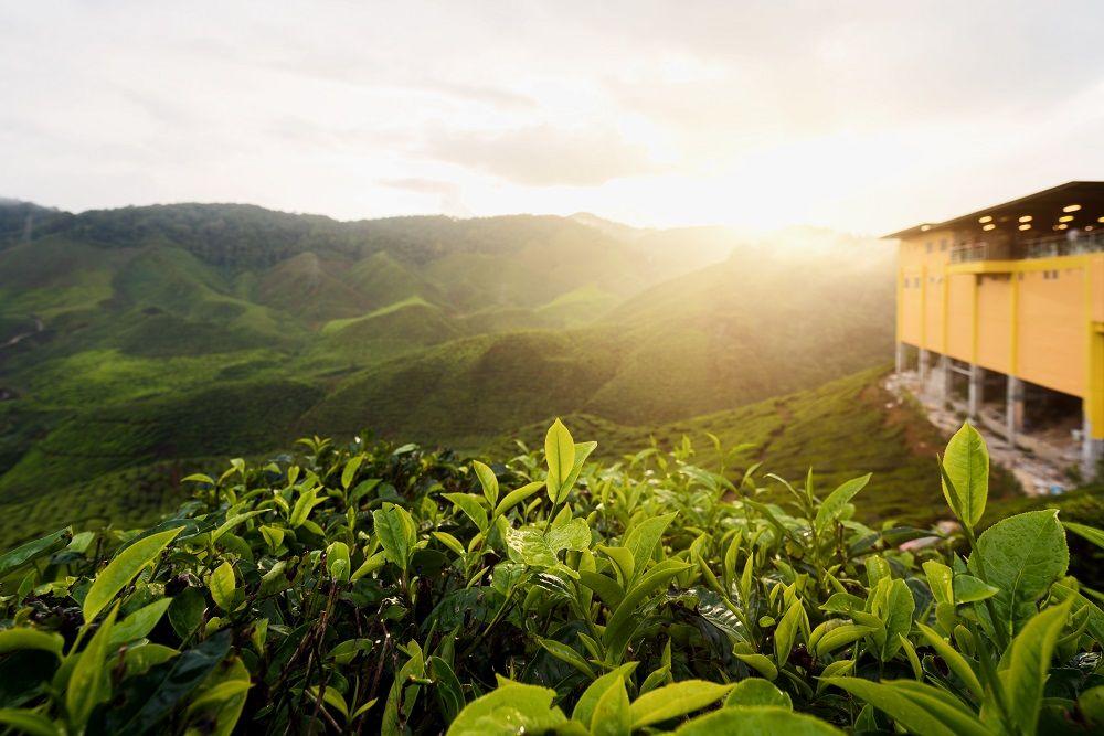 کامرونهایلند Cameron Highlands