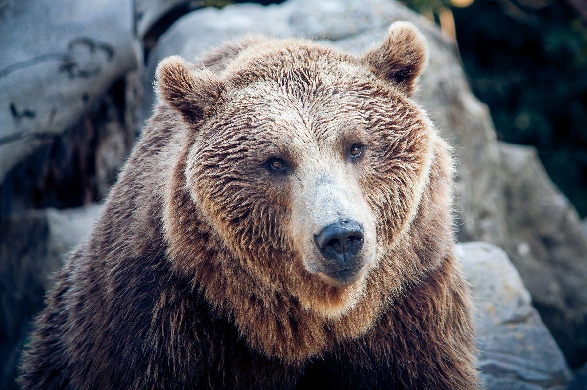 باغ وحش تورنتو The Toronto Zoo